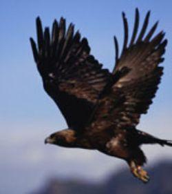 L'Orée des Bois – Aigles du léman